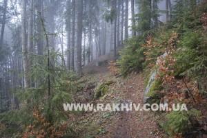 Рахів_ліс_